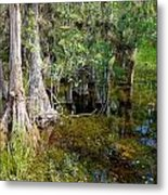 Cypress Trees 4021 Metal Print