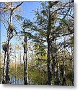 Cypress Swamp Metal Print by Rudy Umans