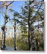 Cypress Swamp Metal Print