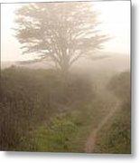 Cypress Tree In The Edge Of A Coastal Fog Metal Print