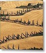 Cypress Tree Lined Road Metal Print