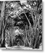 Cypress Tree Tunnel Point Reyes Metal Print
