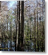 Cypress Trees Metal Print by April Wietrecki Green