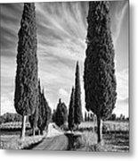 Cypress Trees - Tuscany Metal Print