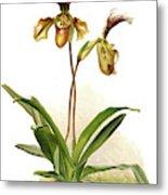 Cypripedium Hybridum Calypso, Sander Metal Print