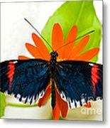 Cythera Butterfly Metal Print