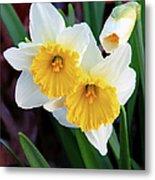 Daffodil Art  Metal Print
