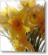 Daffodil Bouquet Metal Print