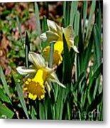 Daffodil Buddies Metal Print