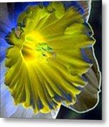 Daffodil Dreams - Photopower 1907 Metal Print