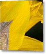 Daffodil Flower Metal Print
