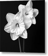 Daffodil Flowers Black And White Metal Print