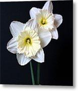 Daffodil Flowers Still Life Metal Print