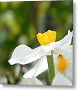 Daffodil In Profile Metal Print