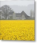 Daffodil Haze Metal Print