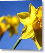 Daffodil Line Metal Print