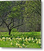 Daffodil Meadow Metal Print
