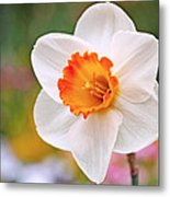 Daffodil  Metal Print by Rona Black
