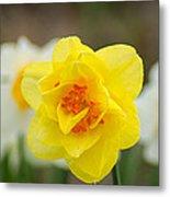 Daffodil Standout Metal Print