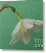 Daffodilon Green 2 Metal Print