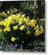 Daffodils And Bluebells Metal Print