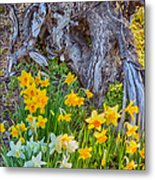 Daffodils And Sculpture Metal Print