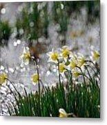 Daffodils On The Shore Metal Print