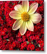 Dahlia And Kalanchoe Metal Print