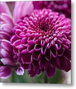 Dahlia And Mums Metal Print