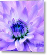 Dahlia Dream Metal Print