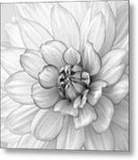 Dahlia Flower Black And White Metal Print