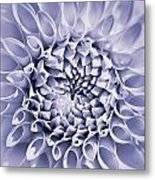 Dahlia Flower Star Burst Purple Metal Print