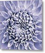 Dahlia Flower Star Burst Purple Metal Print