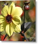 Dahlia Knockout Metal Print