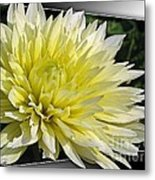 Dahlia Named Canary Fubuki Metal Print