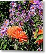 Dahlias And Asters Metal Print
