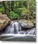 Daintree Rainforest Metal Print