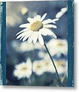 Daisies ... Again - 146a Metal Print