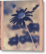 Daisies ... Again - 150ab Metal Print