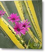 Daisies And Cactus Metal Print