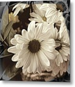 Daisies And Charcoal Metal Print