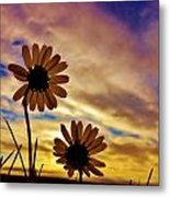 Daisies At Sundown  Metal Print