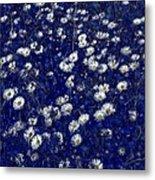 Daisies In Blue Fire Metal Print