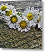 Daisies In Wreath Metal Print