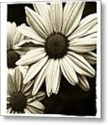 Daisy 1 Metal Print by Tanya Jacobson-Smith