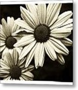 Daisy 2 Metal Print by Tanya Jacobson-Smith