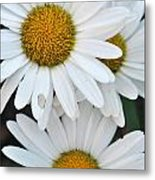 Daisy And Friends Metal Print