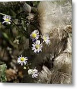 Daisy And Dandelion Metal Print by John Holloway
