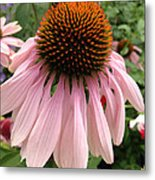 Daisy And Friend Metal Print