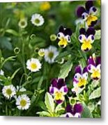 Daisy And Pansy Mix Metal Print